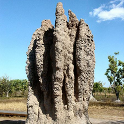 Photo of a cathedral termite mound
